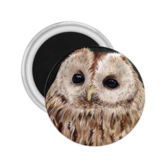 Tawny Owl 2 25  Button Magnet