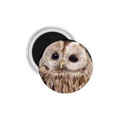 Tawny Owl 1.75  Button Magnet