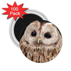 Tawny Owl 2.25  Button Magnet (100 pack)