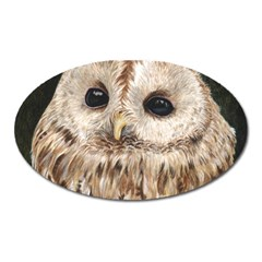 Tawny Owl Magnet (Oval)