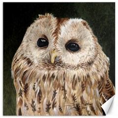 Tawny Owl Canvas 20  x 20  (Unframed)