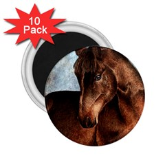 Midnight Jewel  2.25  Button Magnet (10 pack)
