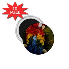 Preening 1.75  Button Magnet (10 pack)