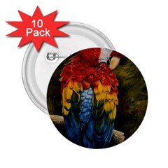 Preening 2.25  Button (10 pack)