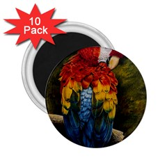 Preening 2.25  Button Magnet (10 pack)