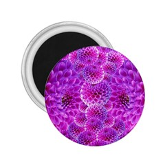 Purple Dahlias 2 25  Button Magnet