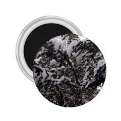 Snowy Trees 2.25  Button Magnet
