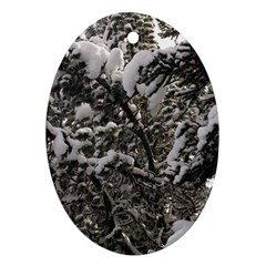 Snowy Trees Oval Ornament