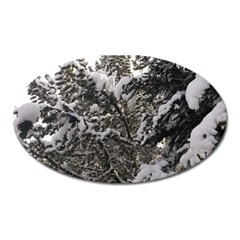 Snowy Trees Magnet (Oval)