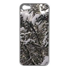 Snowy Trees Apple Iphone 5 Case (silver)