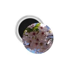 Sakura 1.75  Button Magnet