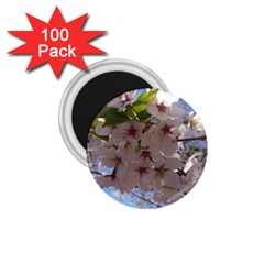 Sakura 1.75  Button Magnet (100 pack)