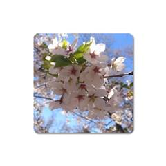 Sakura Magnet (Square)