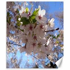 Sakura Canvas 20  x 24  (Unframed)