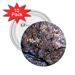 Sakura Tree 2.25  Button (10 pack)