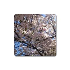 Sakura Tree Magnet (Square)