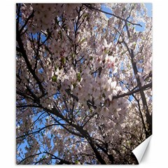 Sakura Tree Canvas 8  x 10  (Unframed)