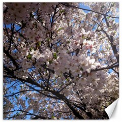 Sakura Tree Canvas 12  x 12  (Unframed)