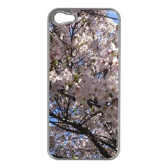 Sakura Tree Apple Iphone 5 Case (silver)