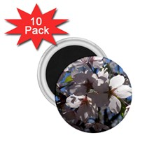 Cherry Blossoms 1 75  Button Magnet (10 Pack)
