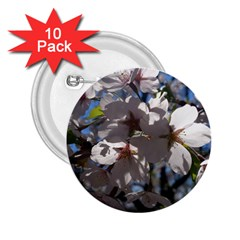 Cherry Blossoms 2 25  Button (10 Pack)