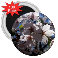 Cherry Blossoms 3  Button Magnet (100 pack)
