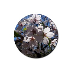 Cherry Blossoms Drink Coasters 4 Pack (Round)