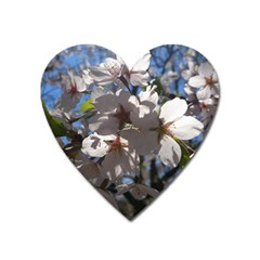 Cherry Blossoms Magnet (heart)