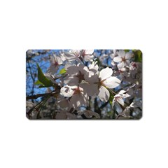Cherry Blossoms Magnet (name Card)