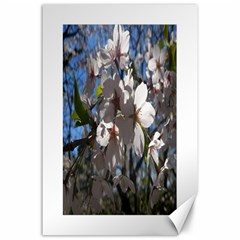 Cherry Blossoms Canvas 24  x 36  (Unframed)