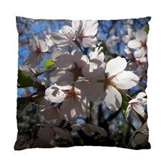 Cherry Blossoms Cushion Case (single Sided)