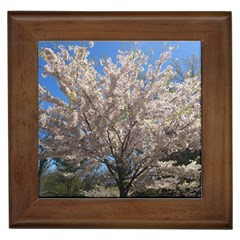 Cherry Blossoms Tree Framed Ceramic Tile