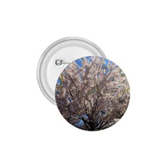 Cherry Blossoms Tree 1.75  Button