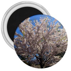 Cherry Blossoms Tree 3  Button Magnet