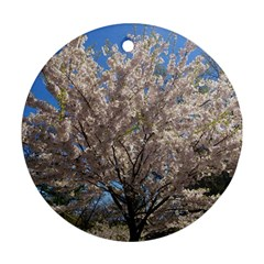 Cherry Blossoms Tree Round Ornament