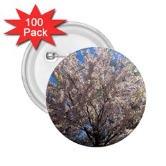 Cherry Blossoms Tree 2 25  Button (100 Pack)