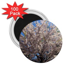 Cherry Blossoms Tree 2.25  Button Magnet (100 pack)