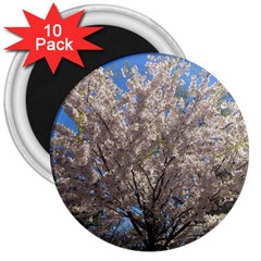 Cherry Blossoms Tree 3  Button Magnet (10 Pack)