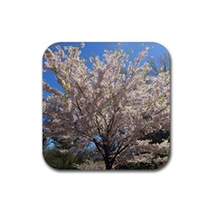 Cherry Blossoms Tree Drink Coasters 4 Pack (Square)