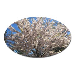 Cherry Blossoms Tree Magnet (Oval)