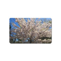Cherry Blossoms Tree Magnet (Name Card)