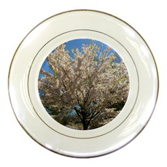 Cherry Blossoms Tree Porcelain Display Plate