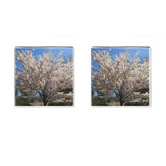 Cherry Blossoms Tree Cufflinks (Square)