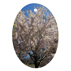 Cherry Blossoms Tree Oval Ornament (Two Sides)