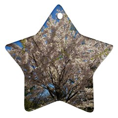 Cherry Blossoms Tree Star Ornament (Two Sides)