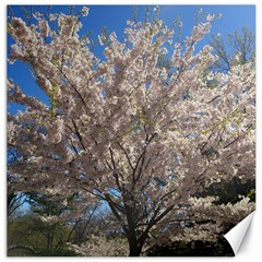 Cherry Blossoms Tree Canvas 16  x 16  (Unframed)