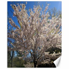 Cherry Blossoms Tree Canvas 16  X 20  (unframed)