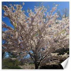 Cherry Blossoms Tree Canvas 20  X 20  (unframed)