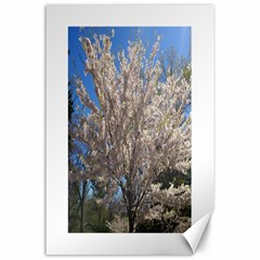 Cherry Blossoms Tree Canvas 24  X 36  (unframed)
