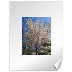Cherry Blossoms Tree Canvas 36  X 48  (unframed)